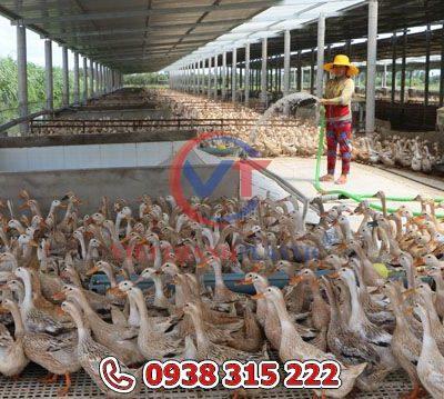 Sàn nhựa nuôi vịt – gà – ngan 50×60 cm